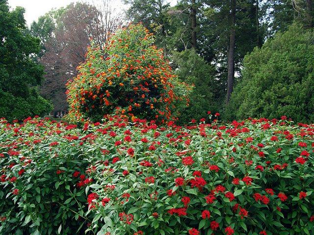красиво цветущих