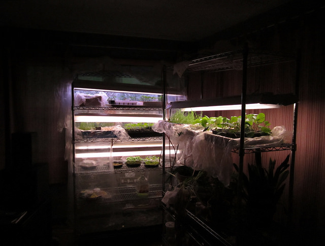 Расчет освещения светодиодными светильниками в теплице