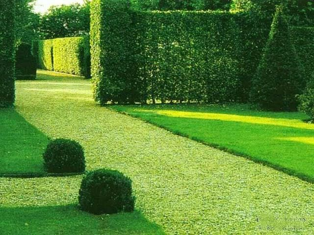 декоративный газон