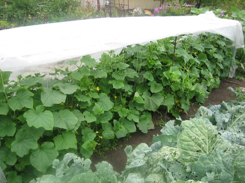 Грядки для овощей