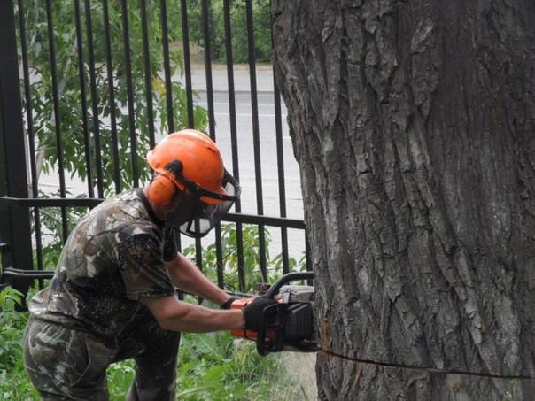 Как кронировать деревья?