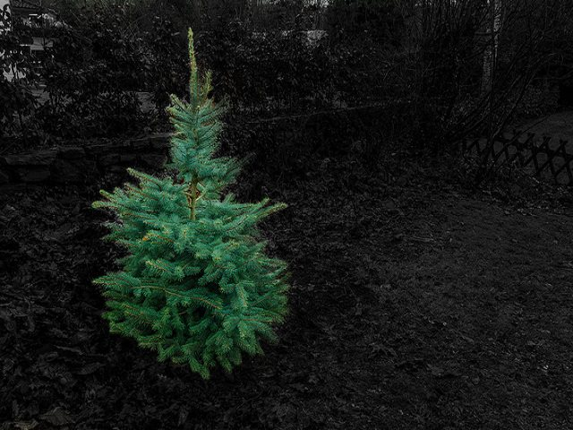 Грунт для посадки елки