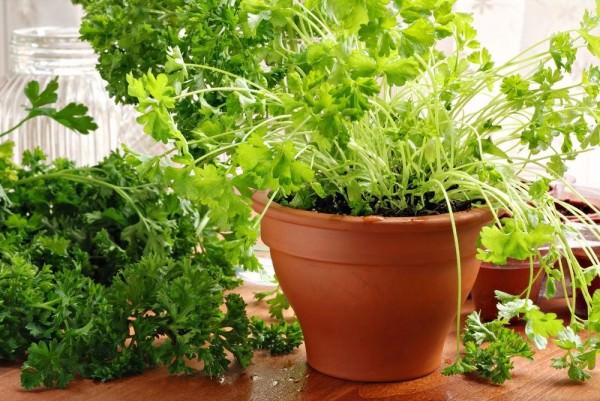 Почему дома не оастет зелень?