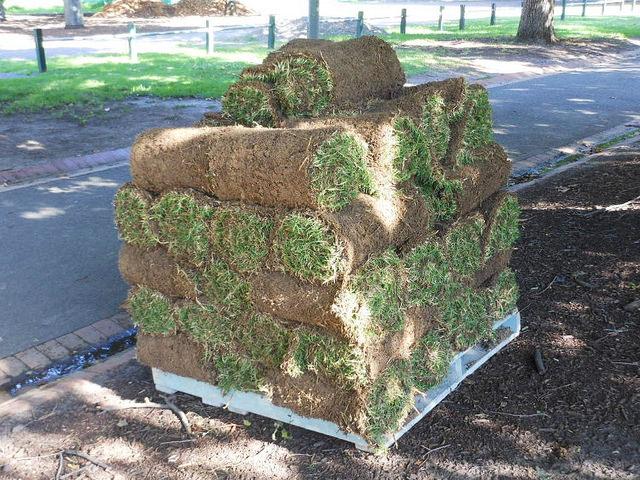 Рулонный газон как выращивают