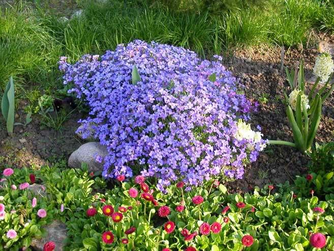 Растения для рокария фото