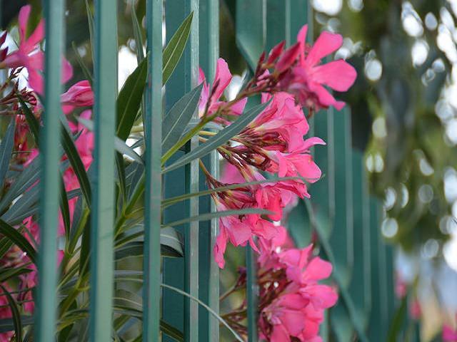 Заборчик из кирпича для цветов