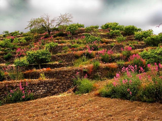 Как создать холм на клумбе фотодизаин?