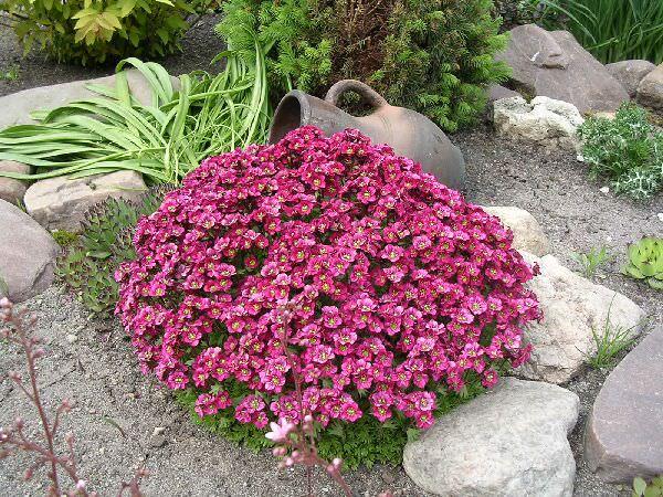 Цветочник на склоне с камнями