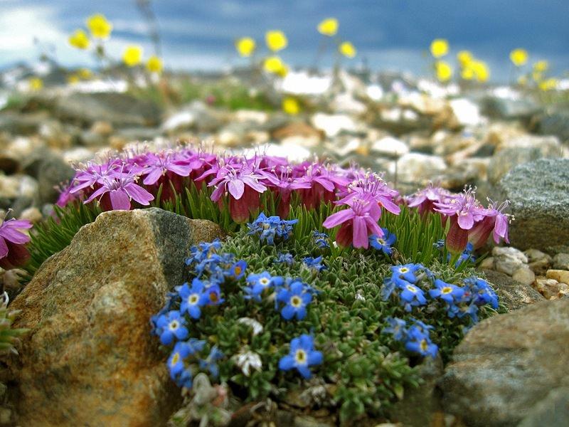 Красивые цветы двор дача