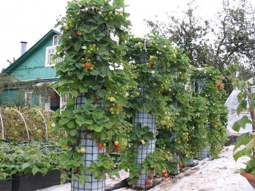 Грдки в саду