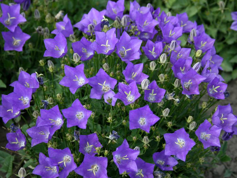 Какие цветы садить в августе