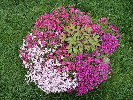 Какие цветы многолетники можно посадить в августе на даче