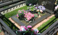 Цветы посажены на могиле