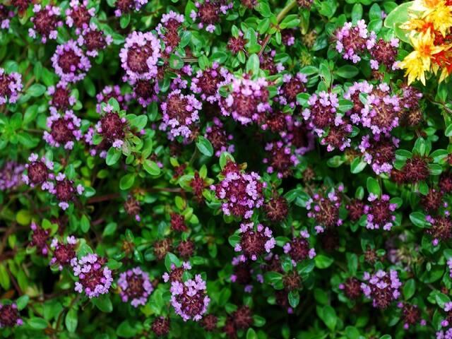 Какие цветы можно сажать в кладбище 913