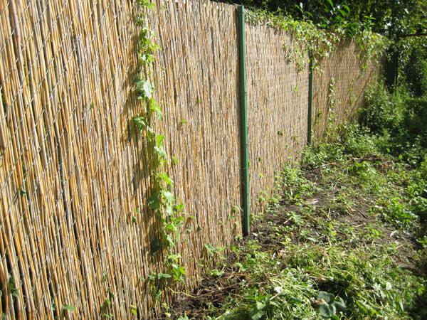 Использование камыша для декорирования ограды
