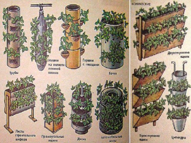 Как сделать дерево из петуний?