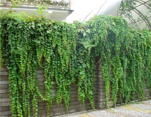 Как украсить свою ограду?