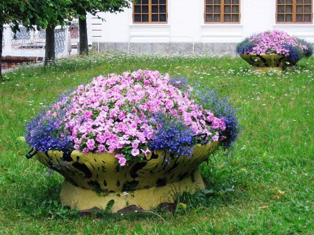 Как красиво посадить бархатцы?
