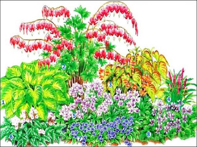 Цветок с листьями сердечками комнатный