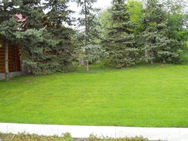 Оформление газона перед домом