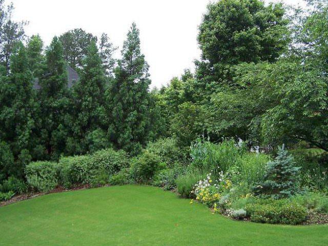 Примеры обычного газона