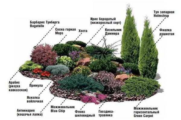 Схема рокария со списком растений 49