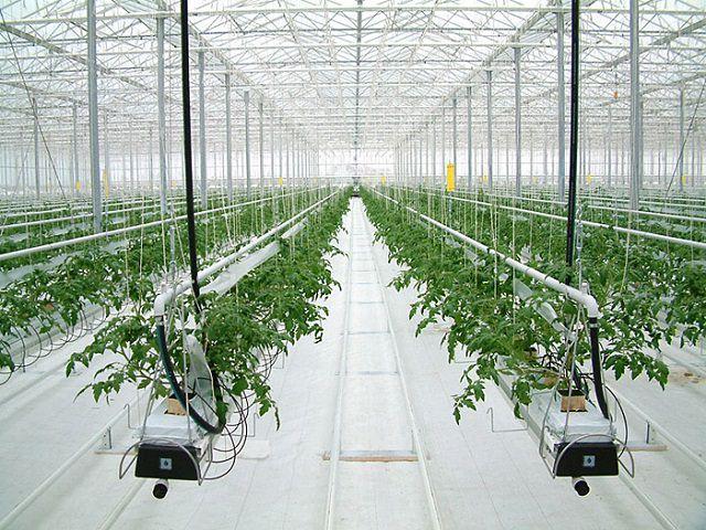Теплица, оснащенная системой для роста растений