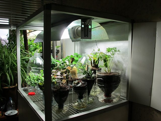 Чертежи выращивания конопли расширяются ли зрачки от марихуаны