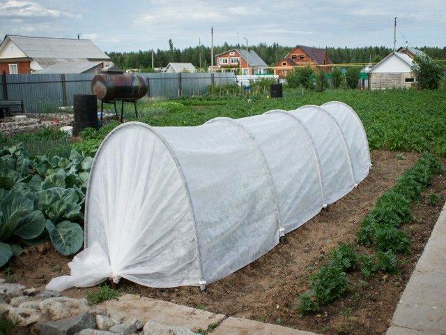 Парник Огурчик на огороде