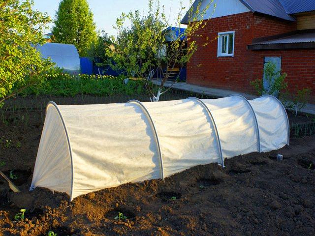 Парник Подснежник установлен в огороде