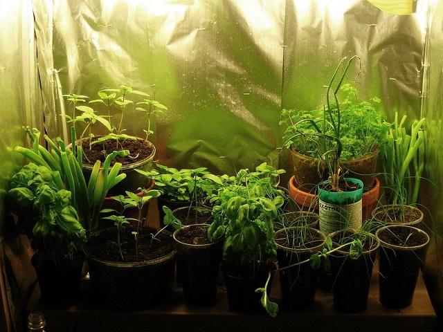 Зеленые растения стоят в гроубоксе