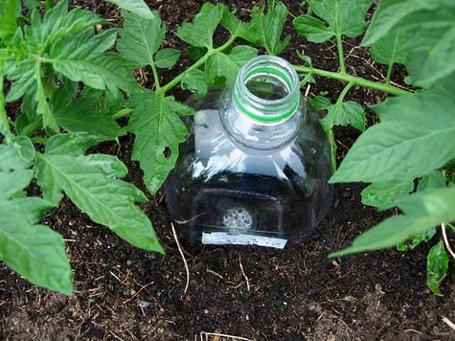 Капельный полив из бутылок