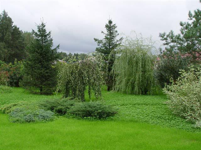 Деревья и кусты равномерно распределены по участку