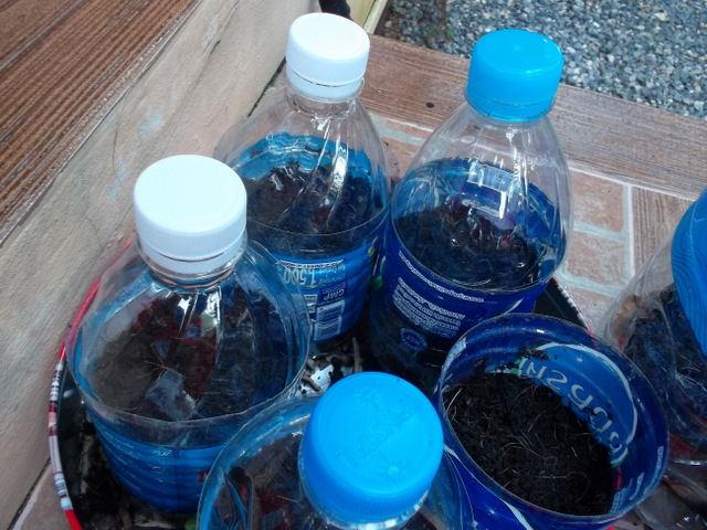 Самодельные перегнойные стаканчики