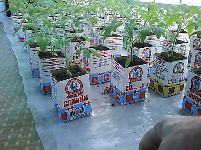Горщыки для розсади