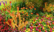 Яркий цветник на даче