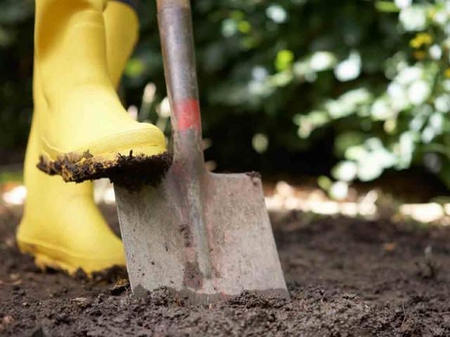 Дачник в желтых сапогах копает землю лопатой
