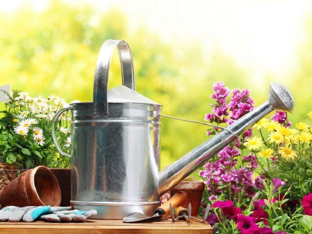 Садовая лейка на столе