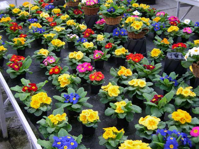 Садовые цветы многолетники