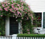 Вьющиеся растения над входом