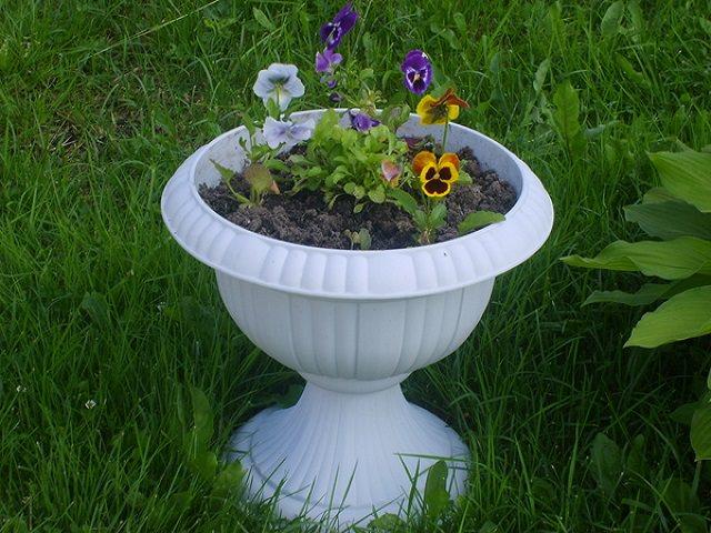 Виолы в вазоне для цветов