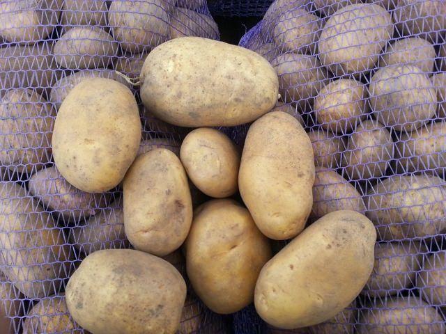 Сорт картофеля Бриз