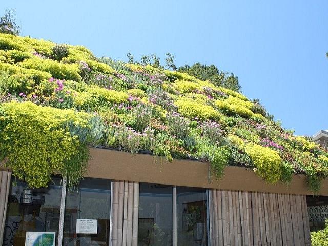 Цветник - озеленение крыши