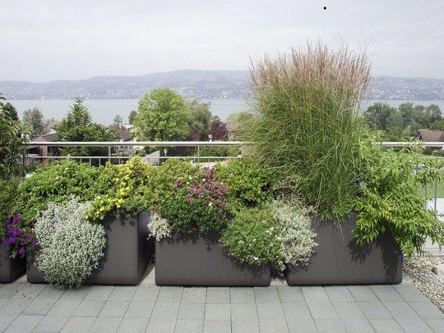 Цветы в контейнерах для озеленения крыши