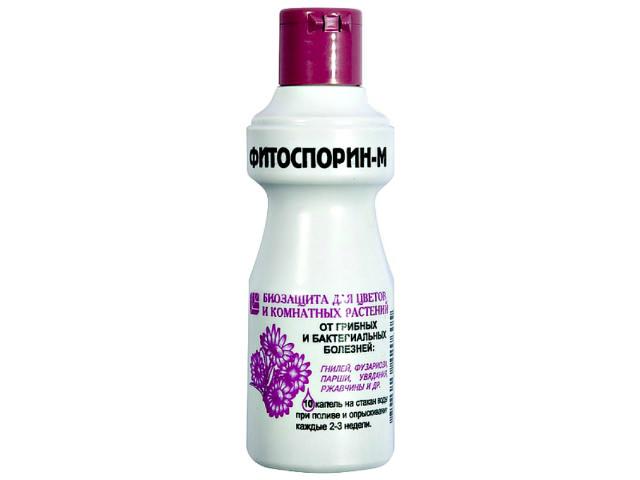 Препарат Фитоспорин-М для герберы