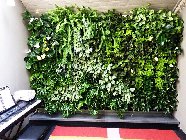 Вертикальное озеленение Green Wall в студии