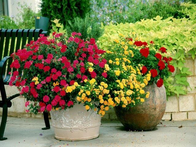 Цветы вазонах