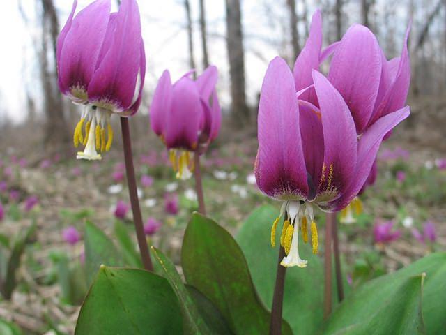 Цветы многолетники для сада неприхотливые долгоцветущие