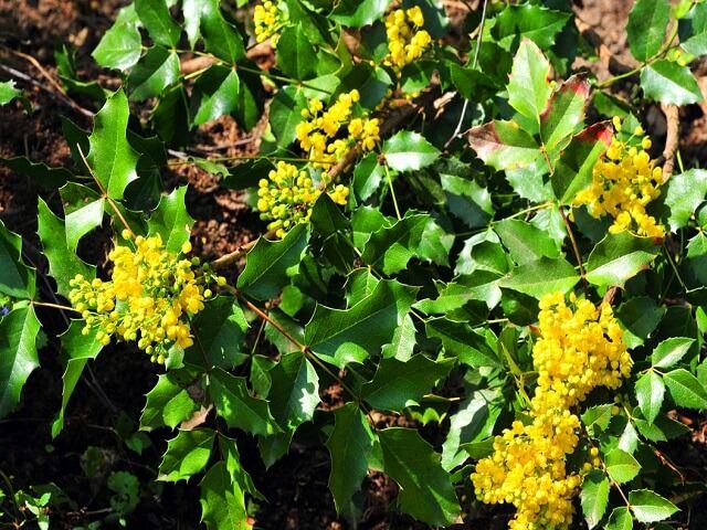 Растения в жестколистных вечнозеленых лесах