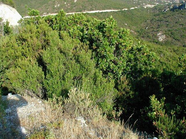 Жестколистные леса растения